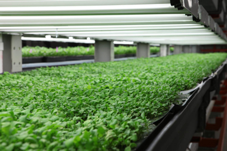 Les fermes d'intérieur, l'avenir de l'agriculture?