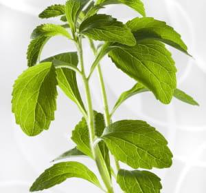 le rébaudiosidea, édulcorant extrait de la stevia, est 100% naturel.