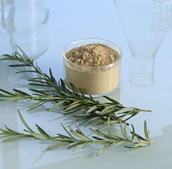 la poudre de romarin est utilisée comme anti-oxydant dans l'industrie