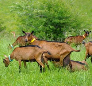 dessociétés louent des troupeaux à des particuliers ou des entreprises.
