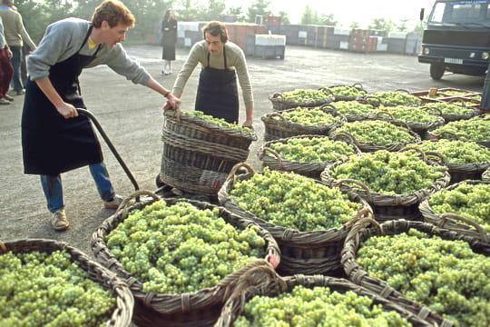 La part de marché des vins français s'érode