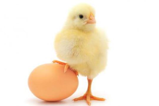Auto-entrepreneurs : après les pigeons, les poussins se rebiffent