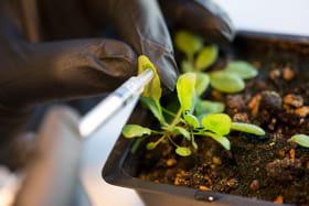 plante bionique1
