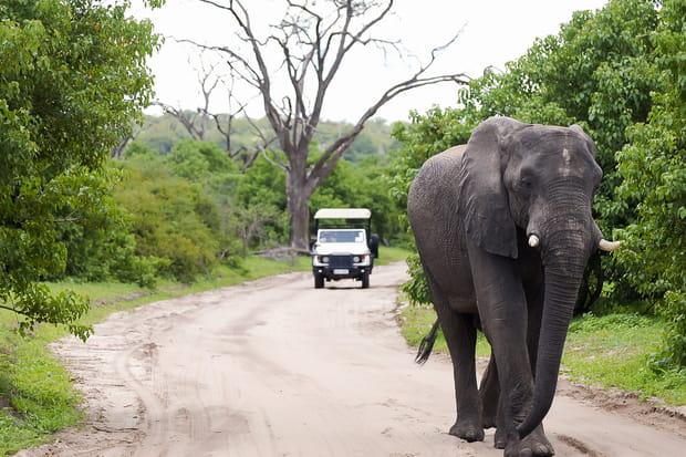 Parc national de Chobe, Botswana