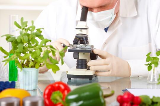Les aliments et les pays les plus touchés par les contaminations OGM