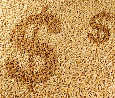 la flambée des prix des produits agricoles va-t-elle se poursuivre?