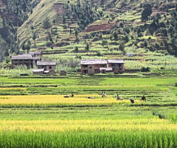 plus de 800 000 hectares de terres malgaches seraient sous contrôle étranger.