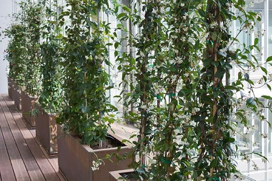 Siège BNP Paribas Cardif : jardin d'hiver