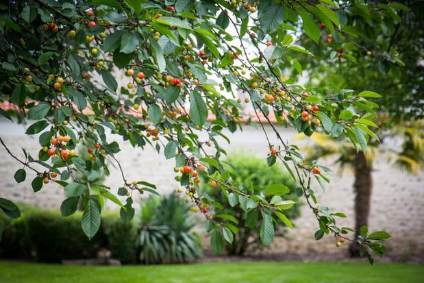 De nombreux arbres fruitiers
