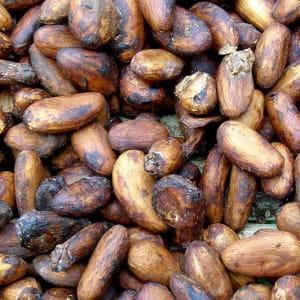 loin de se tasser, la demande mondiale de cacao devrait encore s'accroître car