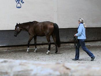 le cheval est quelque peu récalcitrant à avancer