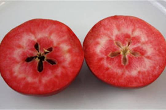 La pomme à chair rouge s'apprête àdébarquer en France