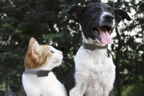 L'IoT a tout pour plaire aux vétérinaires mais doit encore les séduire