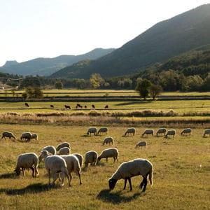 pastoralisme dans le parc naturel des préalpes d'azur.