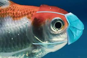 Retrouvez tous les poissons d'avril du JDN