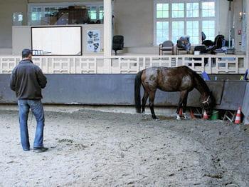 les premiers pas sont parfois hésitants : comment faire obéir le cheval ?