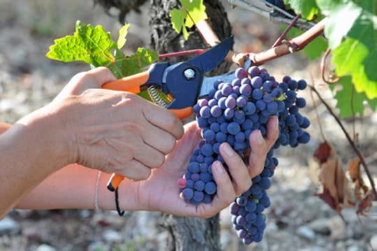 Devenir vigneron ne s'improvise pas