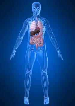 grâce aux cellules-souches, il est possible de faire croître des tissus humains.