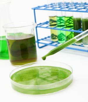 grâce aux algues, solazyme produit du biocarburant sans entrer en concurrence