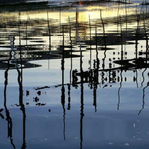 chiffre d'affaires cumulé des pme d'aquaculture en bretagne : 86 millions €.
